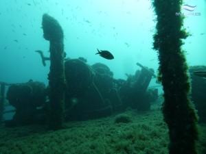 Tauchgang am Wrack der Peltastis vor der Insel KRK